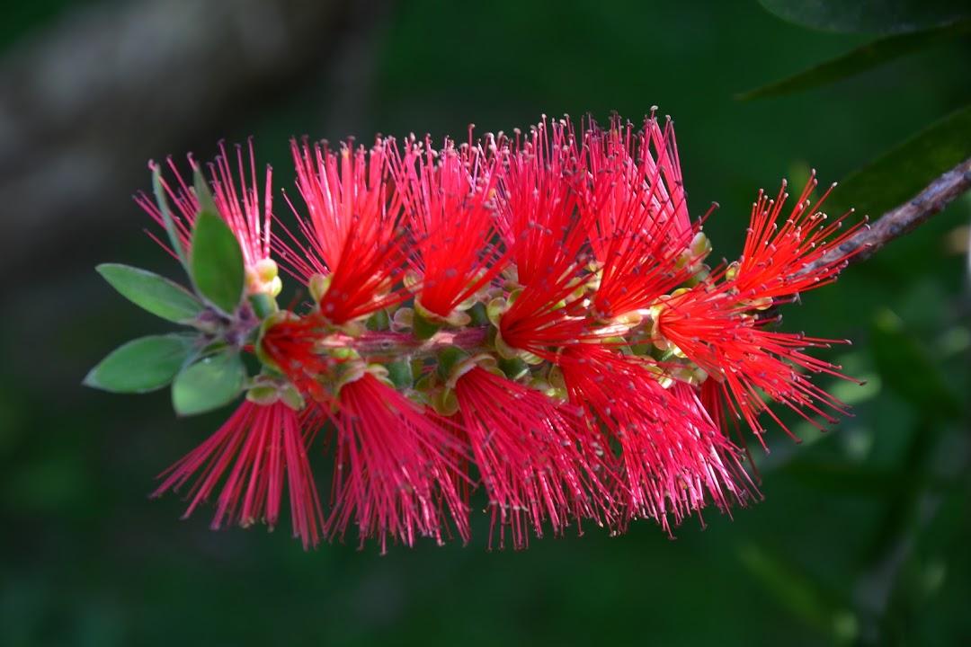 Květena Azor- železnec